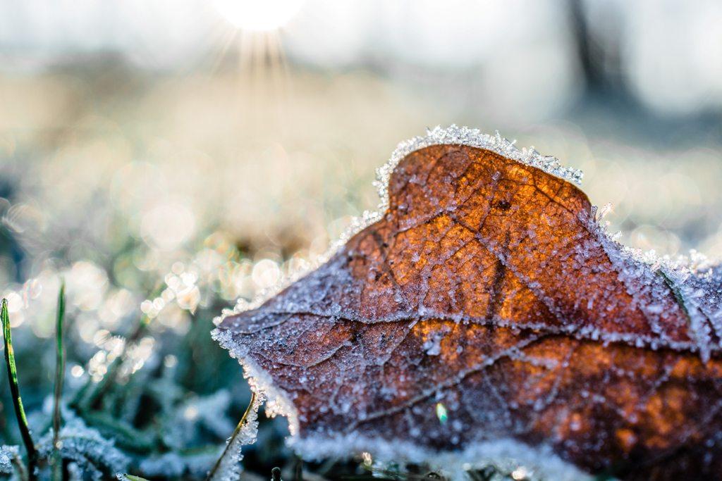 Your Winter Garden To Do List
