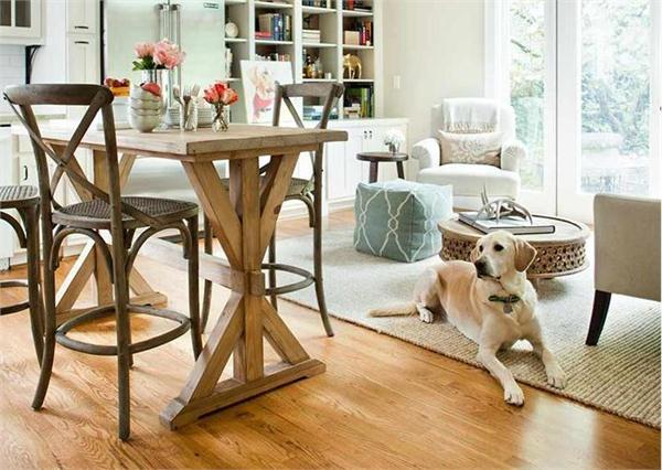 Designing a dog friendly house that will be easy to clean