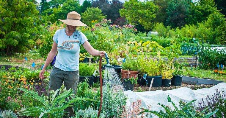 HOW TO FIND A GARDENER TO MAKE YOUR HOME EVEN MORE UNIQUE