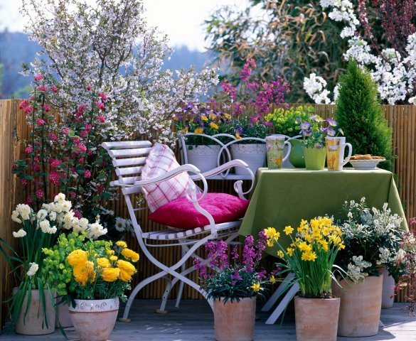 5 Unmissable Ideas to Get Your Garden Spring-Ready