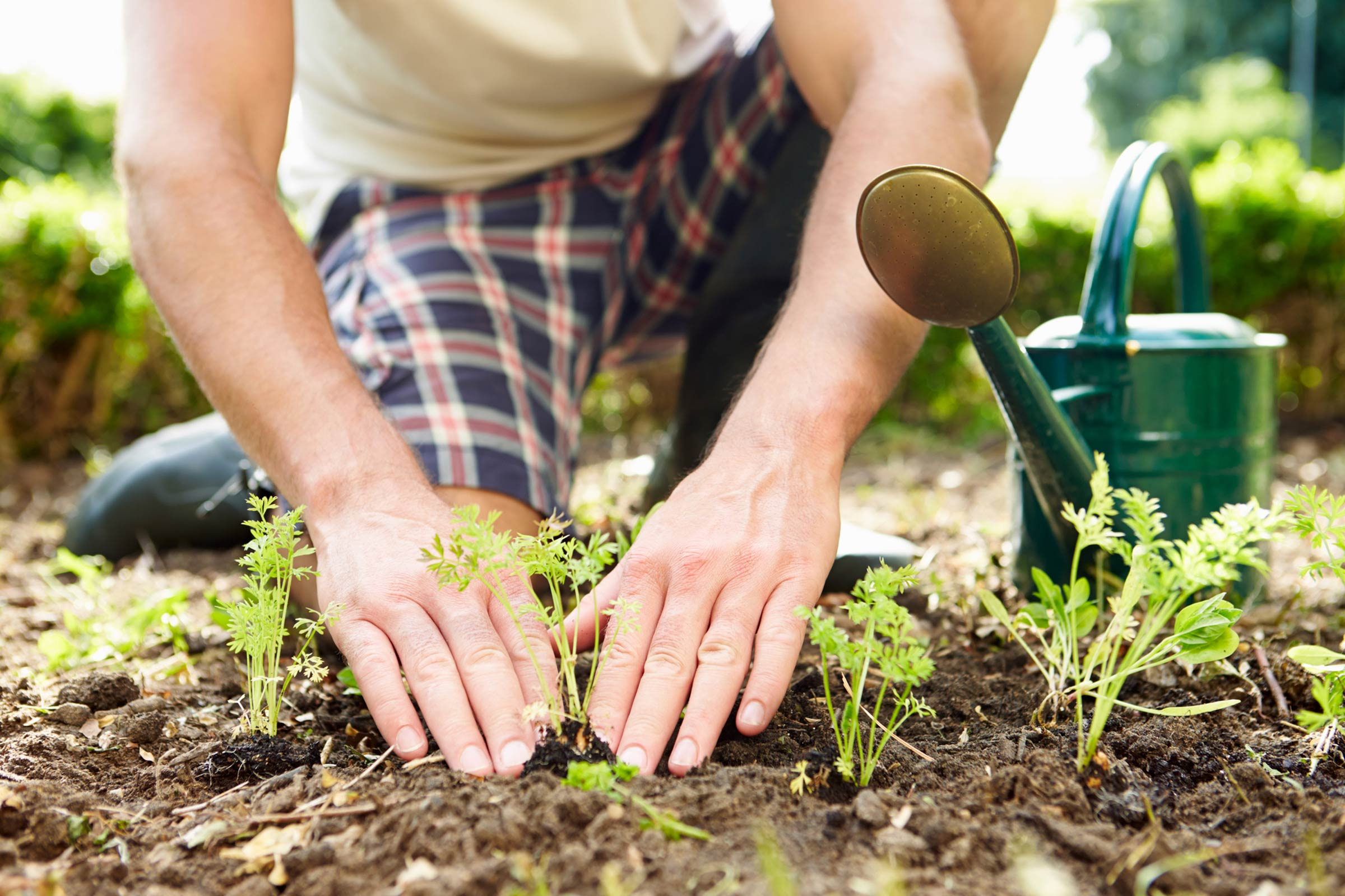 Five Health Reasons to Garden by Dr Sally