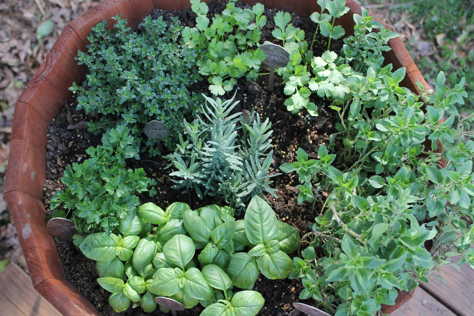 Top medicinal plants you can grow in your garden