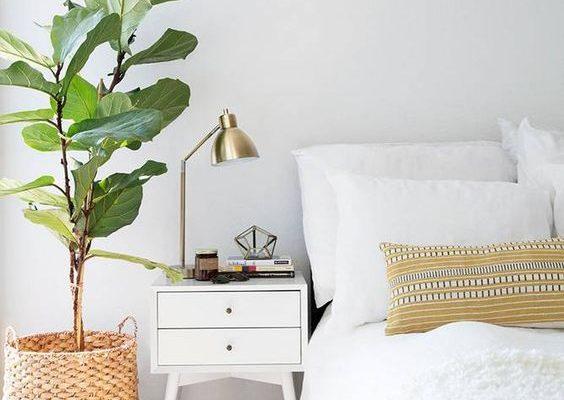 Science says your bedroom needs plants