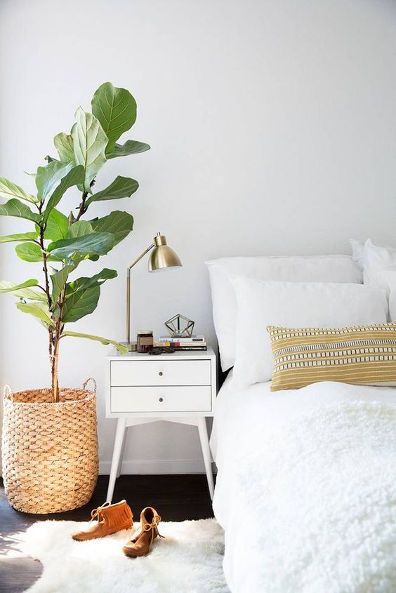 bedroom needs plants