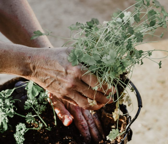 Ways that depression can be combatted by gardening