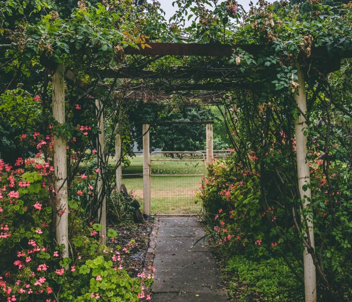 Five Tips for Planning & Designing your Garden