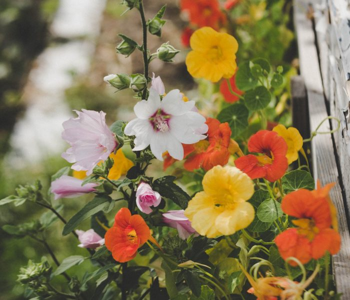 Making your garden into a green haven