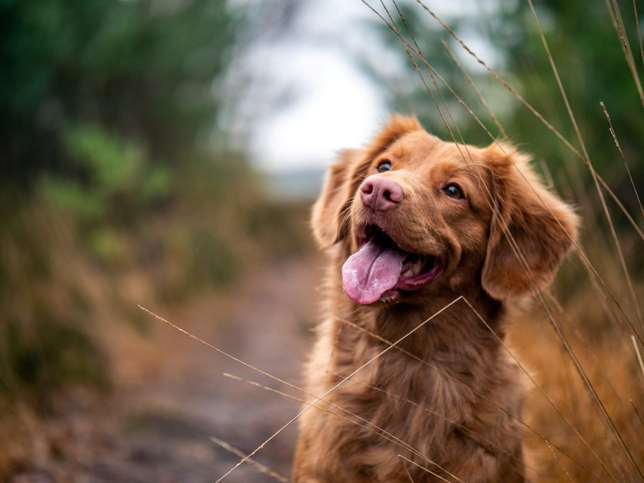 Ensure Your Dog is Happy and Healthy