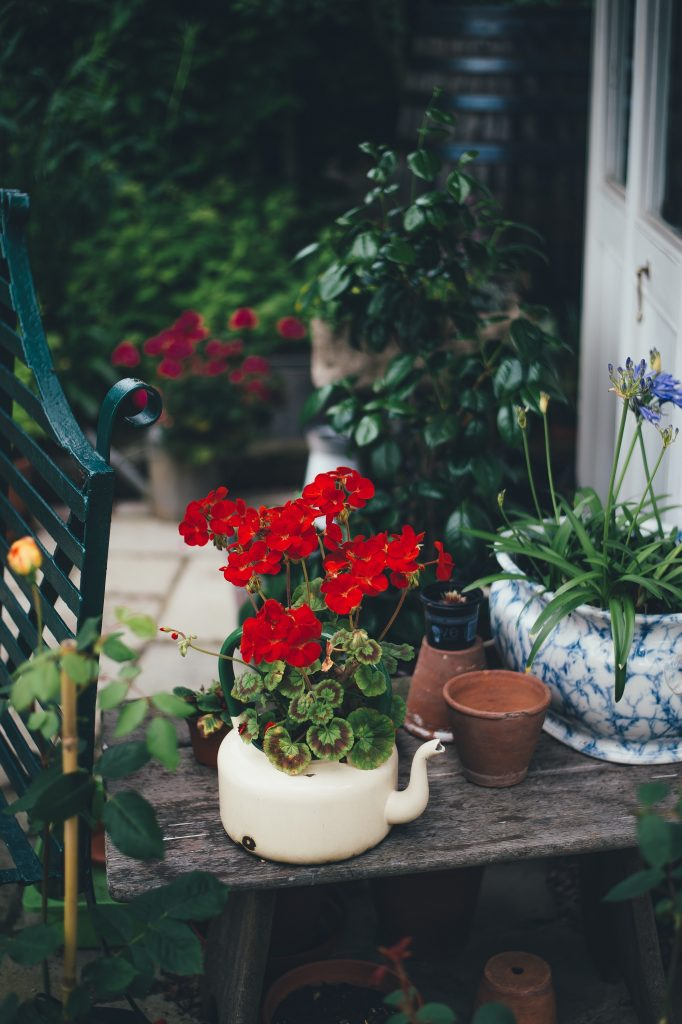 help the environment in your own garden