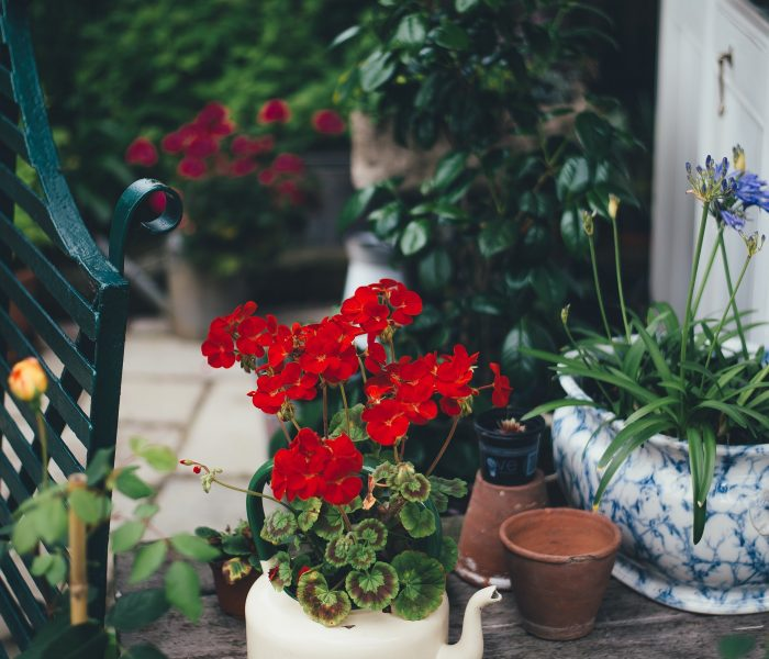 How can you help the environment in your own garden?