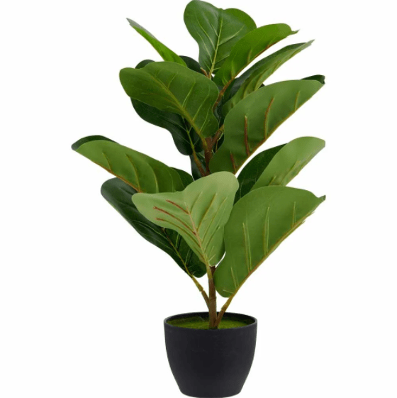 Wilko Fiddle Fig Potted Plant