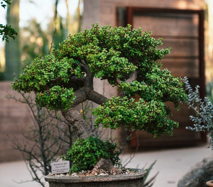 Landscaping Tips & Tricks For Your New Home