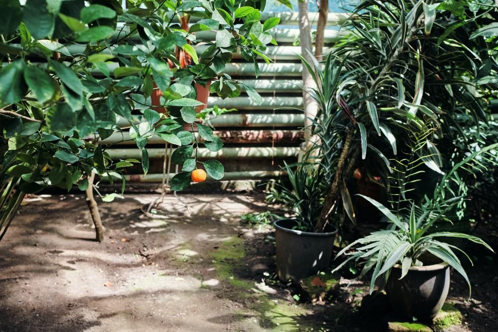 How Do You Make a Small Backyard into an Oasis