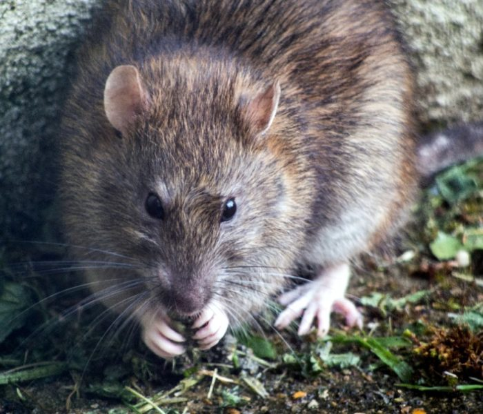 Why Long Island Needs A Pest Control Service Now More Than Ever