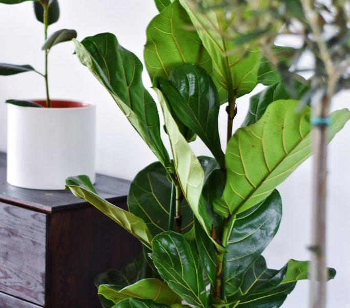 How Plants Can Breathe Fresh Air Into Your Home Decor