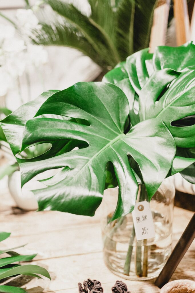 How to care for houseplants in winter