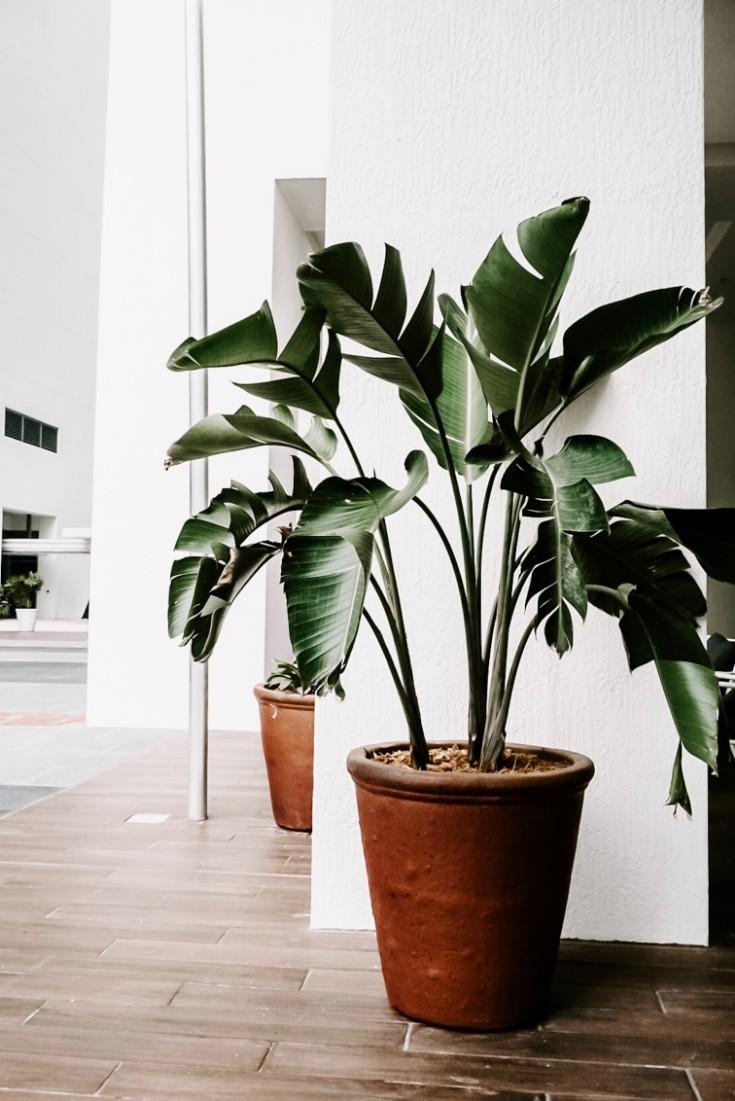 How to Keep Your Indoor Plants Alive in a Heatwave