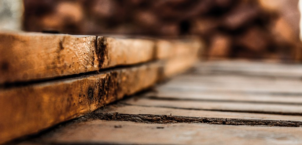 How to spot dry rot and what to do next
