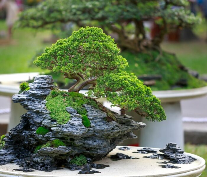 Bonsai Therapy: Does it Work?