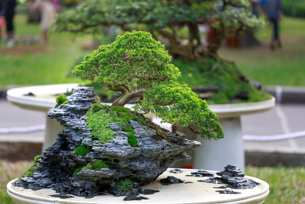 Bonsai Therapy Does it Work
